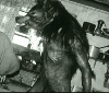 The Werewolf Family (Dog Soldiers)
